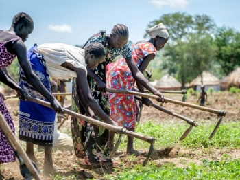 South Sudanese women till the earth for planting at a refugee settlement in Adjumani district
