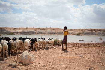 Young Somali kid watering the livestock