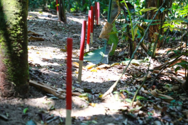 Demining operations in Colombia